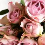 Пепельные розы